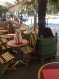 Cafe cat