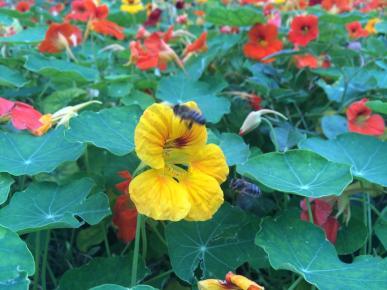bees in flower