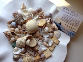 Collected shells from a Newport beach